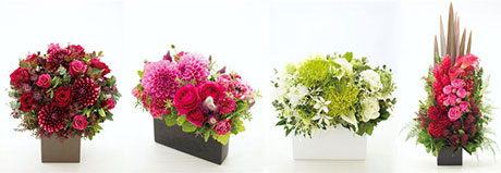 img_sproutflowers